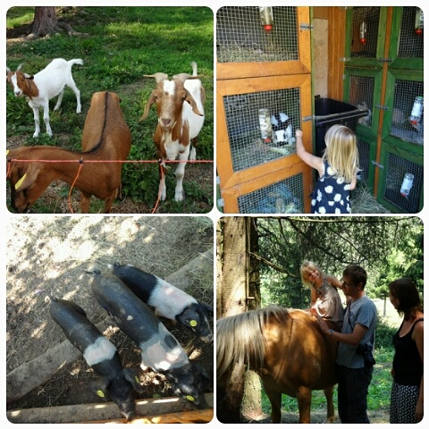 The farm animals.