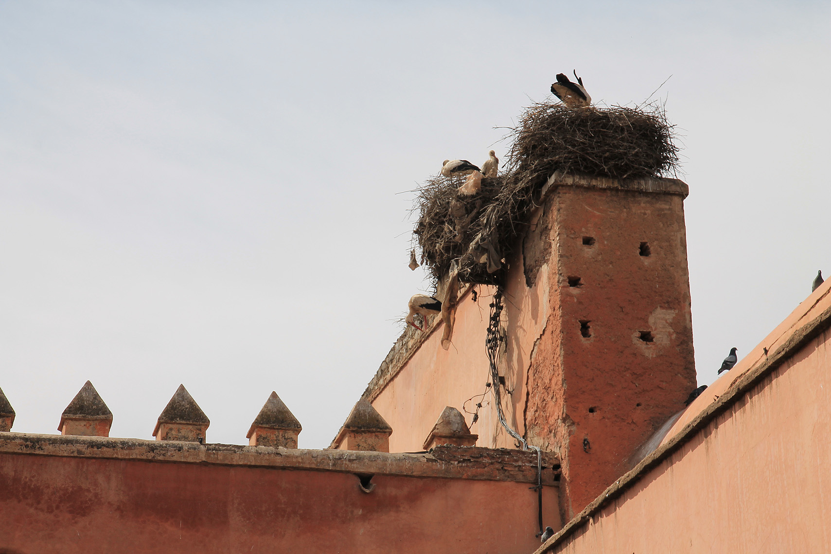 Storks on the city walls.