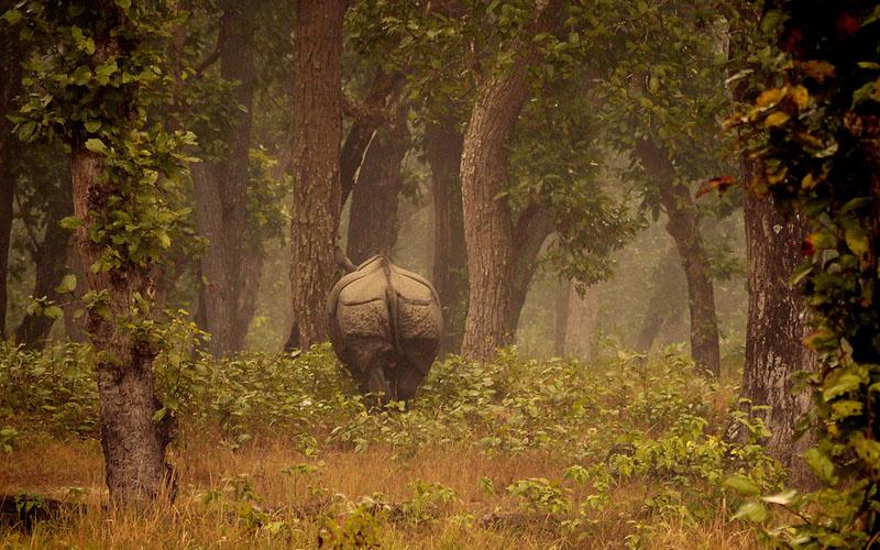 chitwan national park image 2