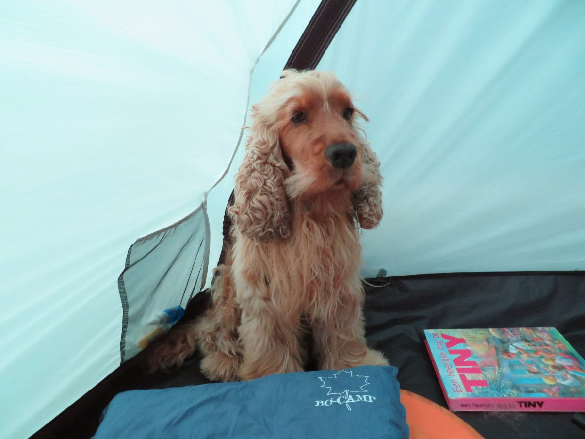 Dog in tent.