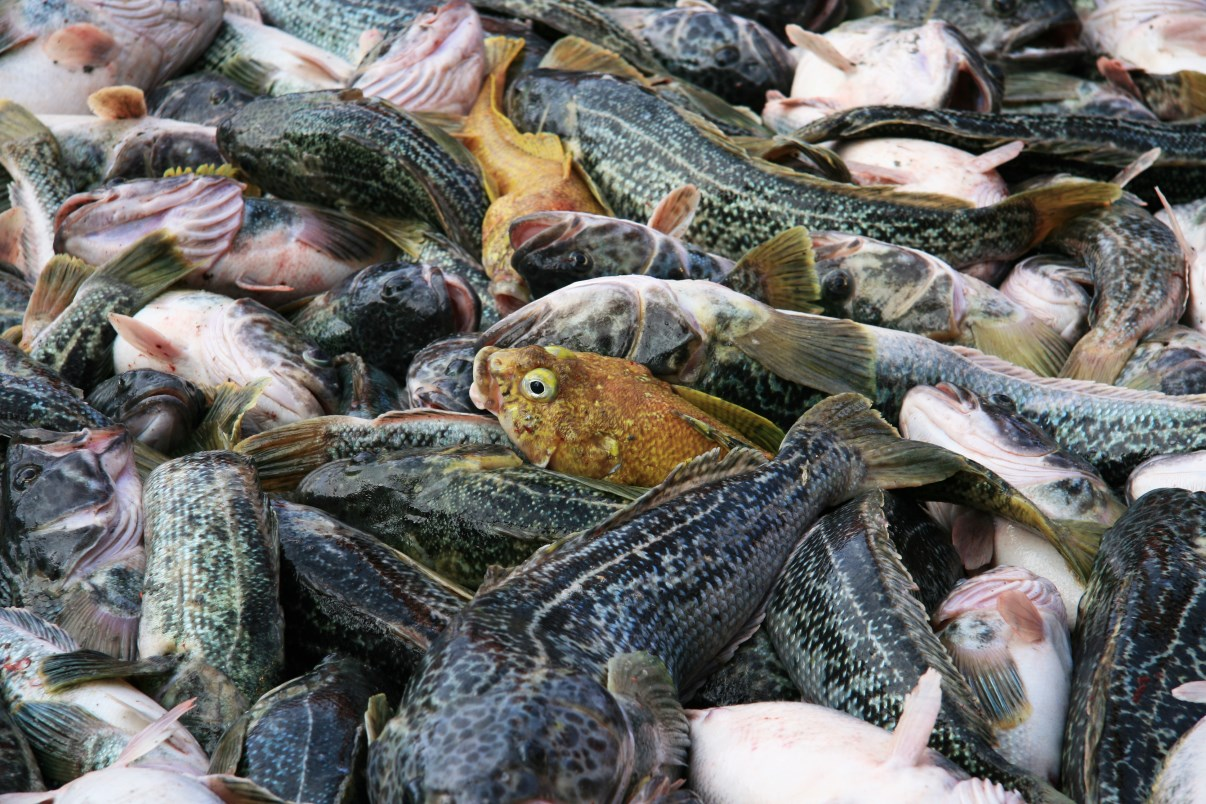 Pile of fish dating