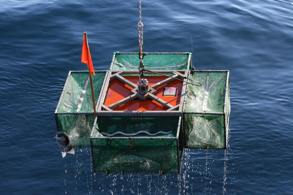 Retrieving the fish trap