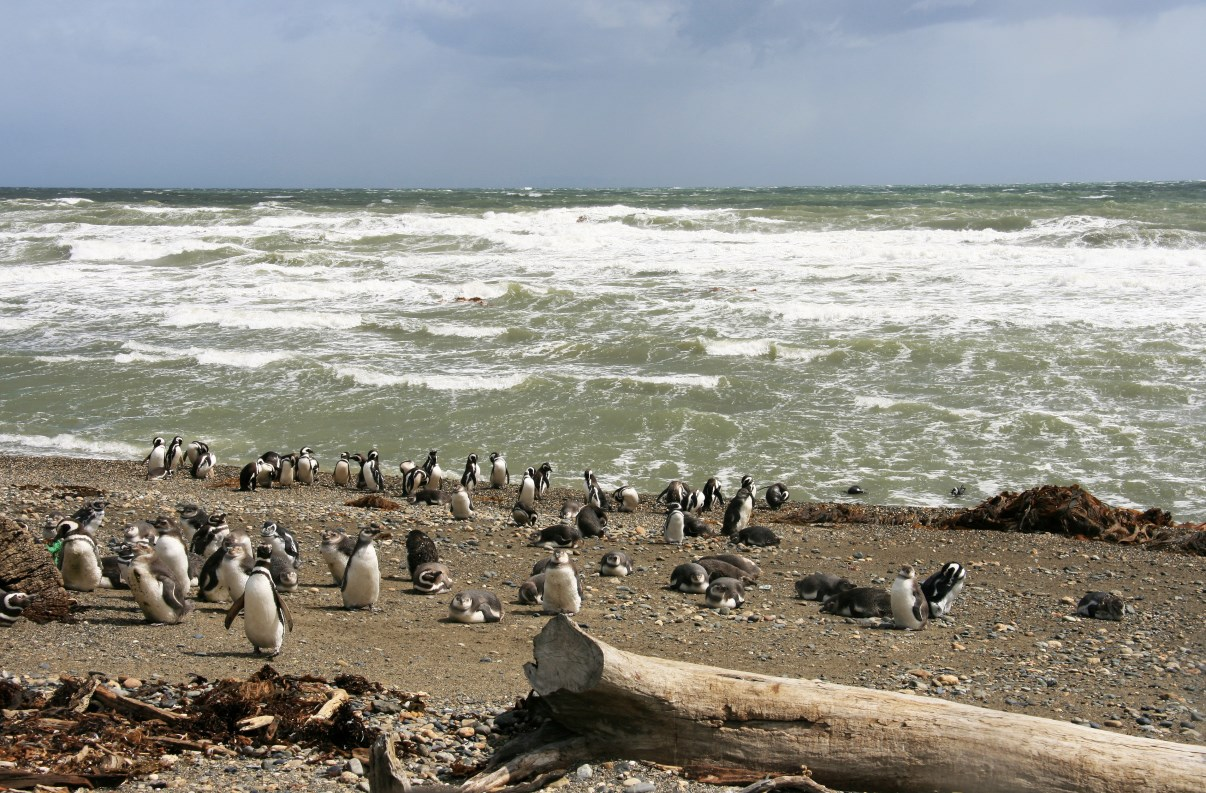 Penguin colony.