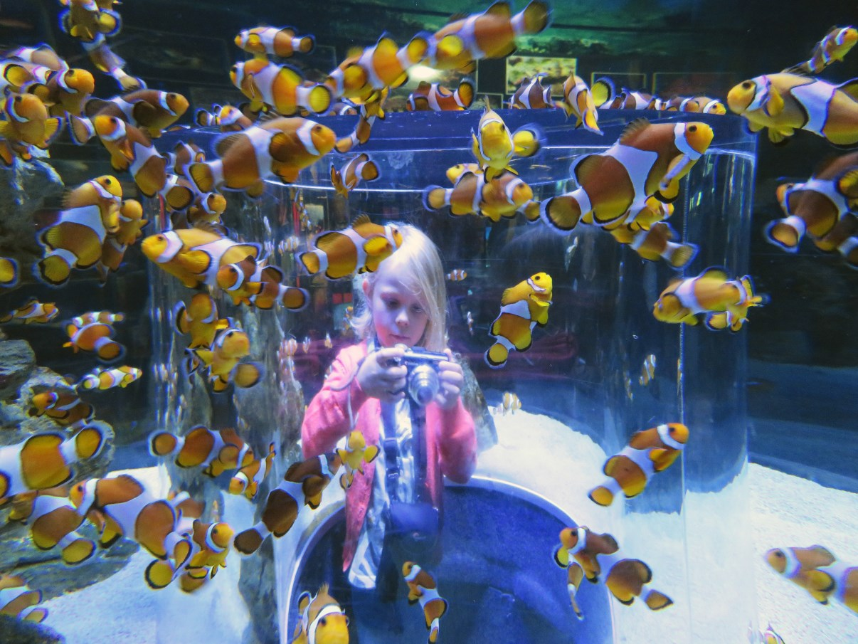 "The ""Nemo"" fish tank."