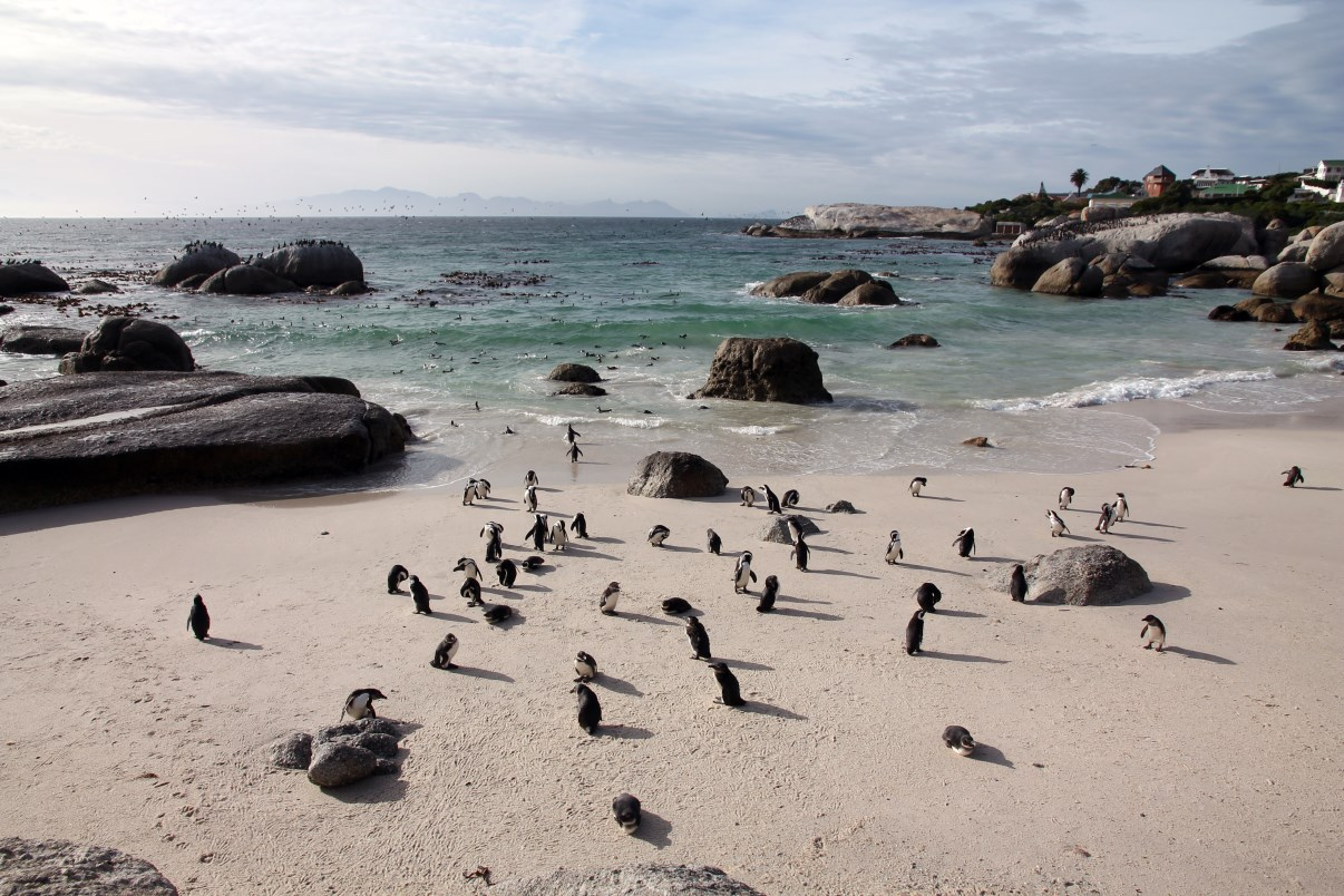 The penguins at Foxy Beach.
