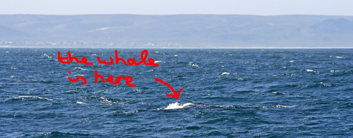 So we kinda saw a few whales...