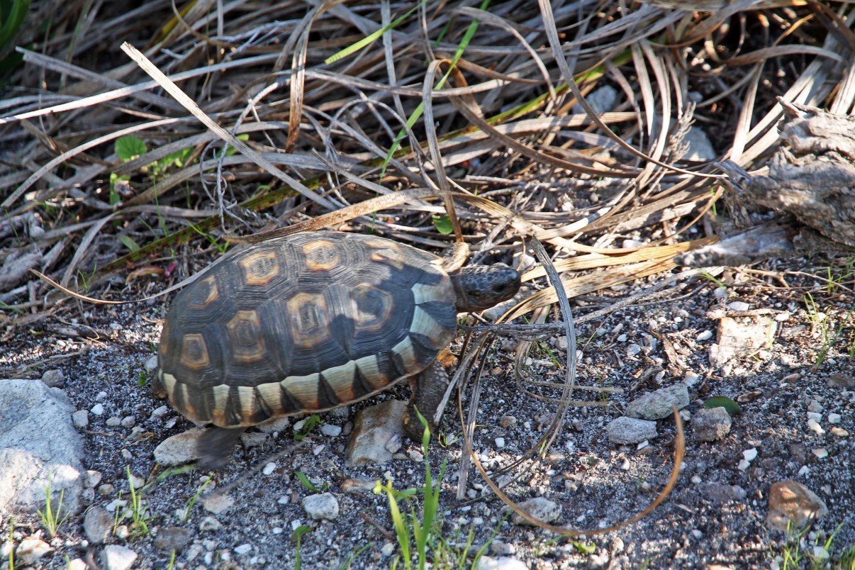 This turtle welcomed us close to the car park.