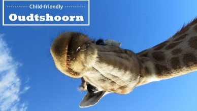 Oudtshoorn_featured3