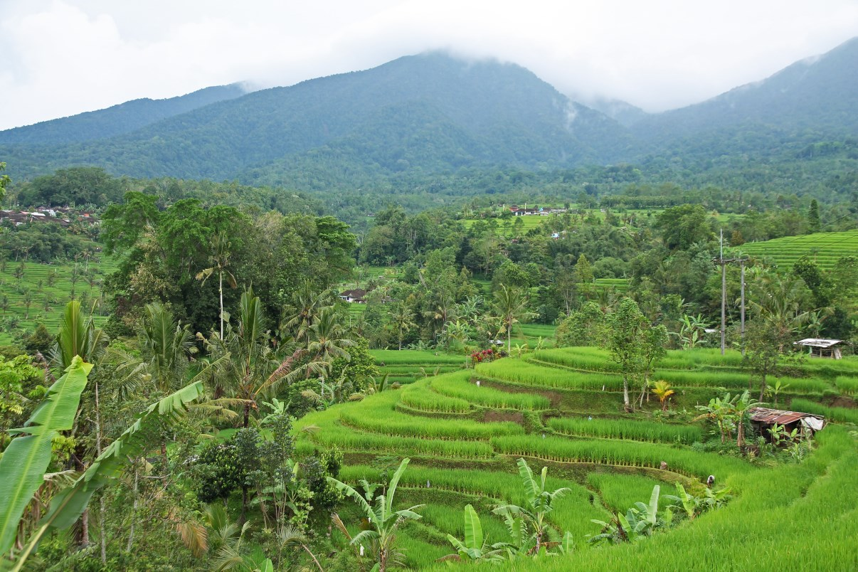 Rice terraces of Jatiluwih.