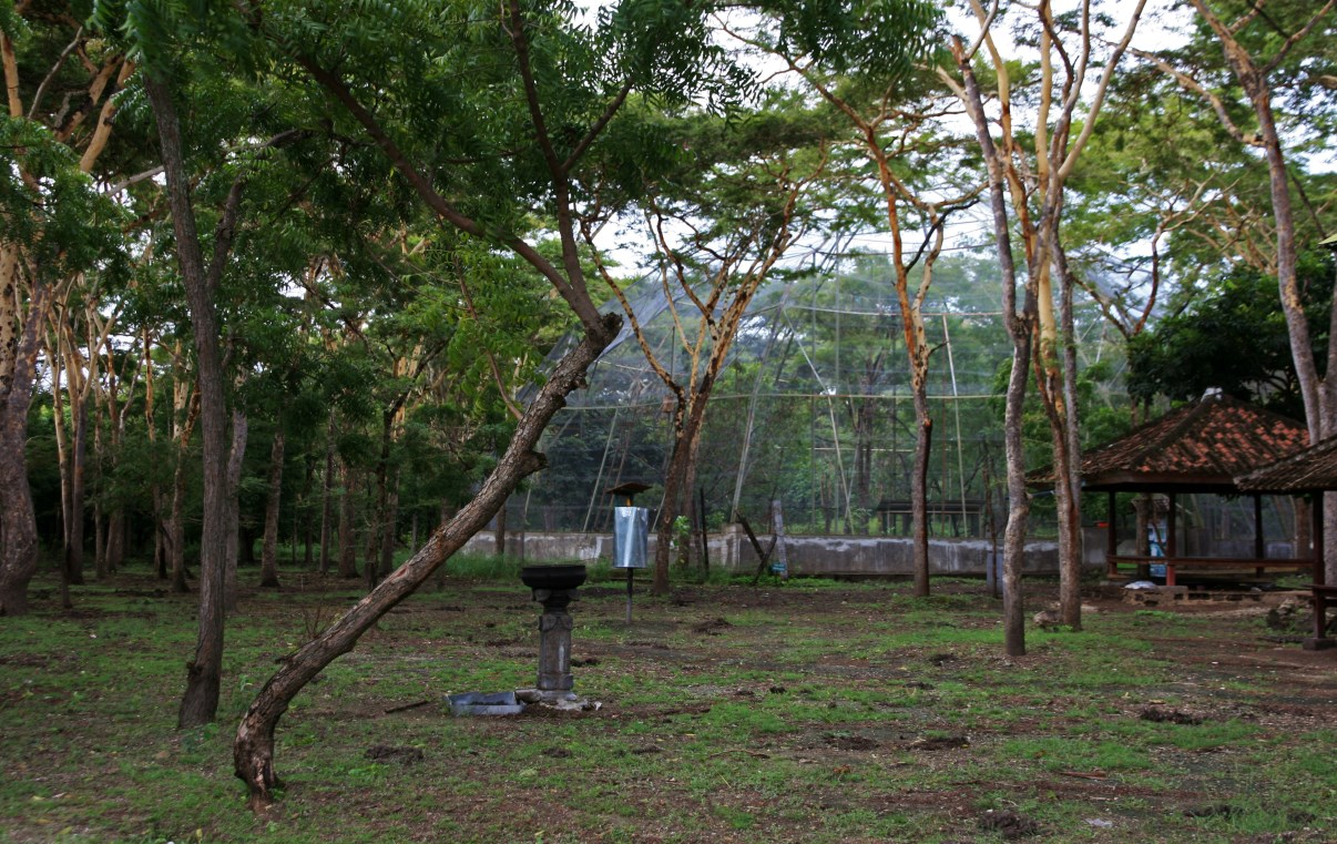 The breeding and release site at Teluk Brumbun.