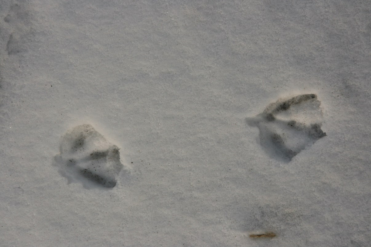 Geese were here...