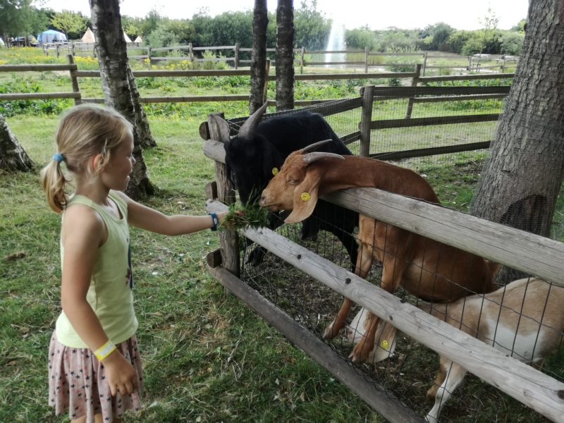 Feeding the goats :-)