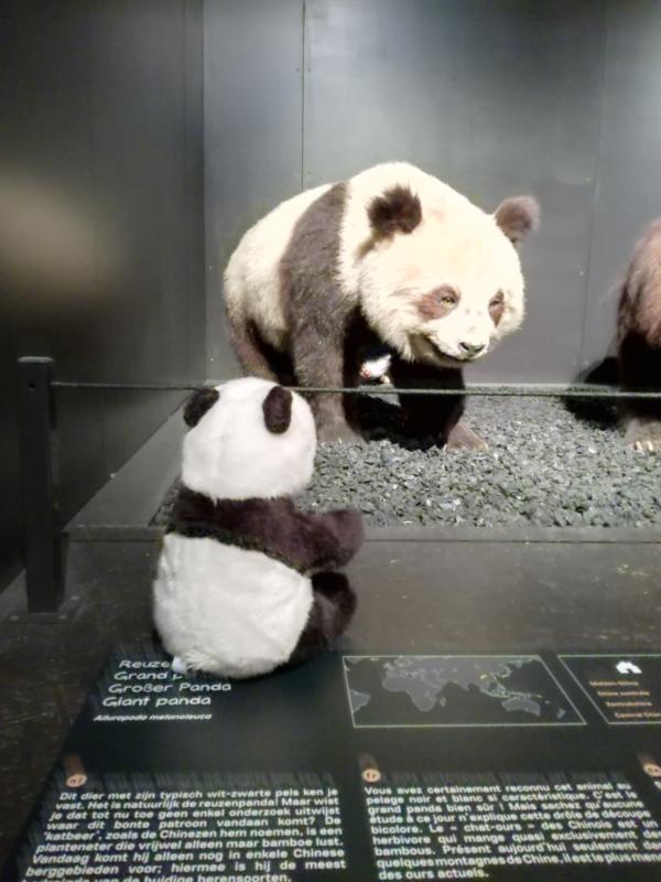 Panda meets Panda.