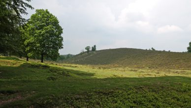 Heathland with a tree.